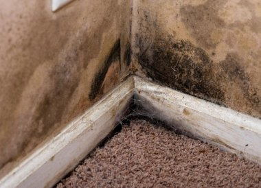 What different types of damp and rot can be found in the home?