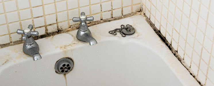 bathroom mould removal services