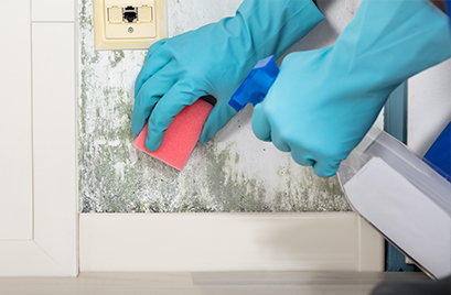 Croft Preservation - How to safely remove mould from your walls