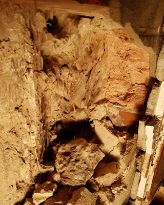 signs of dry rot