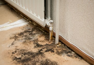 Quick-fire Q&A with Our Damp Experts in Dorset