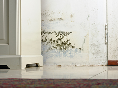 mould removal hampshire