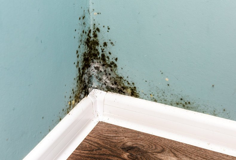 3 Reasons why you should never ignore damp problems in your home