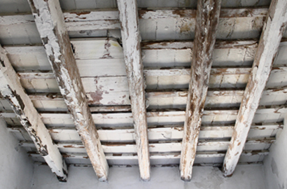 the difference between wet rot and dry rot